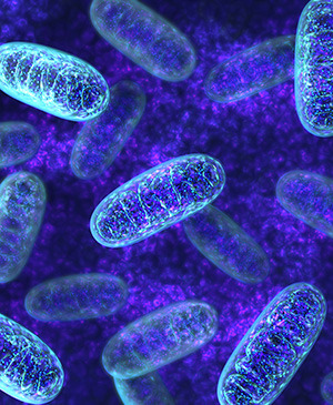 science-weight-loss-mitochondria